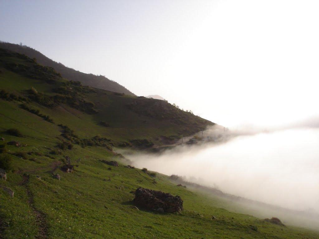 ارتفاعات ارفع در مه غلیظ