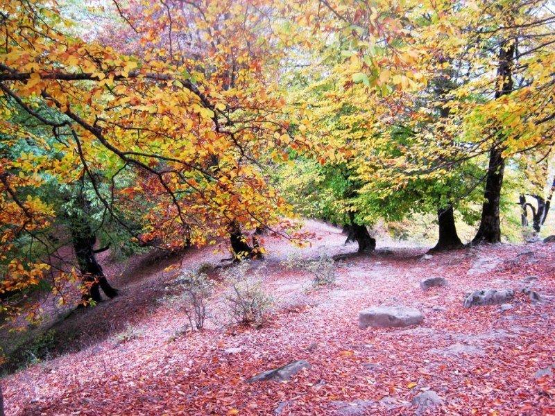 جنگل پرتاس